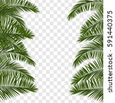 web summer banner. green palm... | Shutterstock .eps vector #591440375