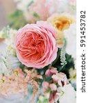 close up of a pink garden rose   Shutterstock . vector #591453782