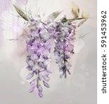 wisteria flowers   watercolor...   Shutterstock . vector #591453962