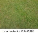green grass field texture as... | Shutterstock . vector #591495485