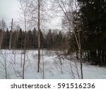 winter forest. wild authentic... | Shutterstock . vector #591516236