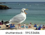 Seagull with mouth wide open and tongue sticking out. - stock photo
