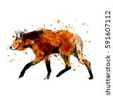 colored hand sketch maned wolf. ... | Shutterstock .eps vector #591607112