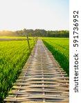 bridge made of bamboo a long... | Shutterstock . vector #591736952