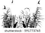 illustration with heron between ...   Shutterstock .eps vector #591773765