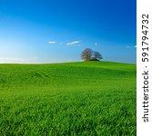 Grassy Green Fields  Bronze Ag...