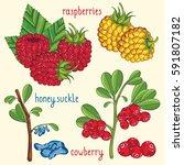 set of berries mix raster... | Shutterstock . vector #591807182