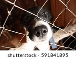 a shelter for dogs  dog nose... | Shutterstock . vector #591841895