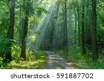 footpath through forest of... | Shutterstock . vector #591887702