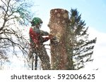 lumberjack at work at a spruce... | Shutterstock . vector #592006625