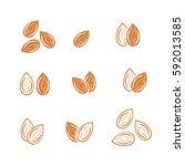almond icon vector | Shutterstock .eps vector #592013585
