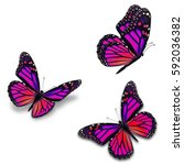 beautiful three monarch...   Shutterstock . vector #592036382