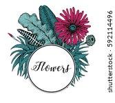 hand drawn vector botany... | Shutterstock .eps vector #592114496