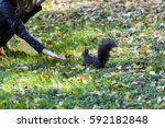 Woman Feeding A Black Squirrel