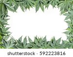 Green Cannabis Leafs Frame Wit...