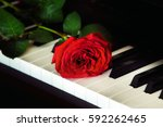red rose on the top of grand... | Shutterstock . vector #592262465