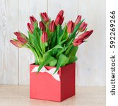 tulip in the gift  box on... | Shutterstock . vector #592269266