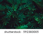 Tropical Fern Bushes