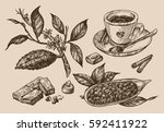 hand drawn vector sketch ... | Shutterstock .eps vector #592411922