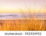 shallow depth of field grass... | Shutterstock . vector #592534952