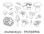 hand drawn doodle ink mushrooms ... | Shutterstock .eps vector #592568906