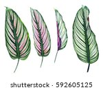 set of four tropical leaves... | Shutterstock . vector #592605125