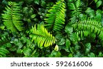 tropical green leaf on vertical ... | Shutterstock . vector #592616006