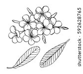 plumeria hand drawn set. vector ...   Shutterstock .eps vector #592628765