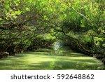 Sicao Mangrove Green Tunnel