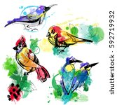 set of watercolor birds | Shutterstock .eps vector #592719932