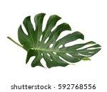 Tropical Jungle Leaf  Monstera...