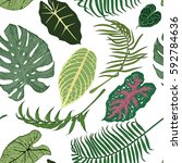 seamless vector pattern with... | Shutterstock .eps vector #592784636