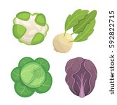 set vector cabbage and lettuce. ... | Shutterstock .eps vector #592822715