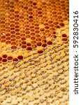 Small photo of Ambrosia. Honeycombs With Honey. Winter Forage For Bees. Close-Up. Macro.