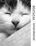 Stock photo cute sleeping kitten in black and white 59291038