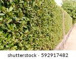 Brick Wall And Ornamental Shru...