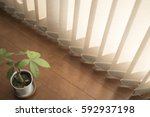 Plant And Blinds