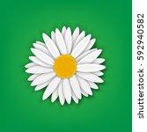 chamomile. vector illustration | Shutterstock .eps vector #592940582