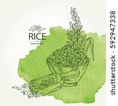 Watercolor Background With Rice ...