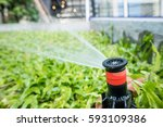 lawn sprinkler automatic... | Shutterstock . vector #593109386