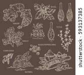 collection of herbs and spice.... | Shutterstock .eps vector #593137385