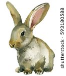 Stock photo grey brown spring rabbit bunny hare watercolor isolated on white background 593180588