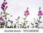 beautiful colorful flowers as... | Shutterstock . vector #593180858