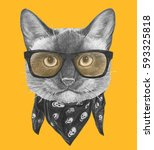 Portrait Of Siamese Cat With...