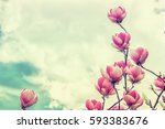 blossoming of magnolia flowers... | Shutterstock . vector #593383676
