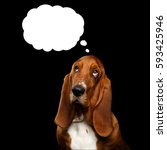 portrait of think basset hound... | Shutterstock . vector #593425946