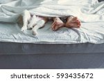 the girl with the puppy in bed. ... | Shutterstock . vector #593435672