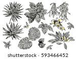 exotic flowers set. botanical ... | Shutterstock . vector #593466452