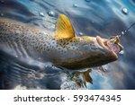 spinning fishing  lure fishing  ... | Shutterstock . vector #593474345