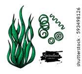 spirulina seaweed hand drawn .... | Shutterstock . vector #593498126